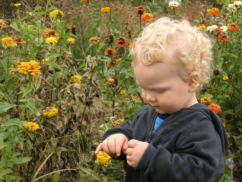 Grandson picking flowers at Butler's Orchard