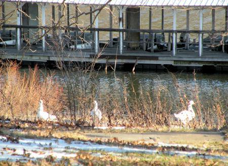 Park Marina Motors >> Fellows Lake Springfield Missouri