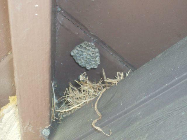 Wasp nest and bird nest under the roof eaves