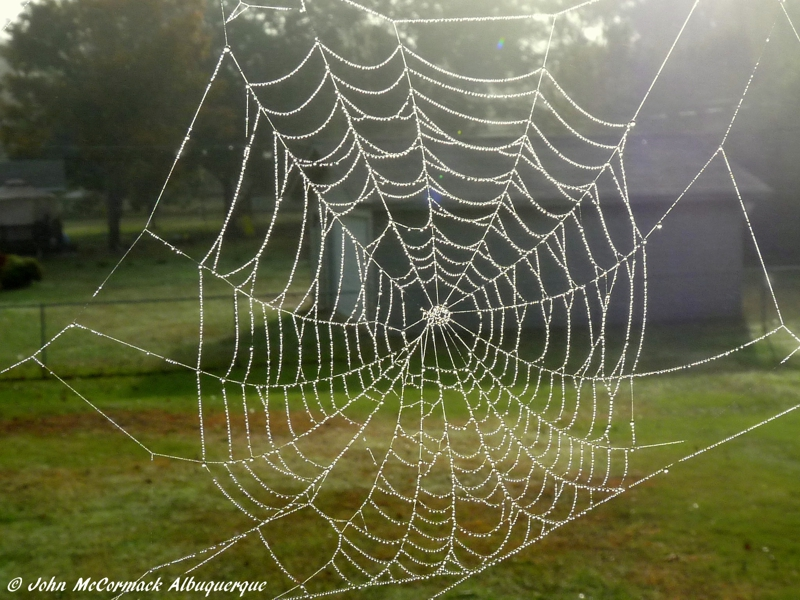 Morning Dew on Spiders Web