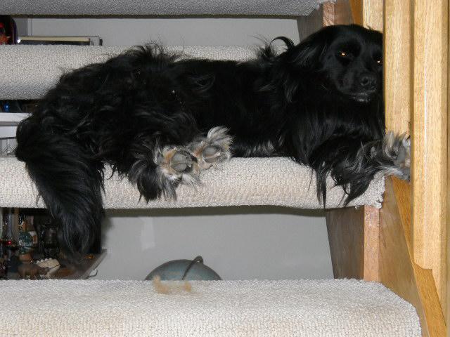 Mom's pup, Susu