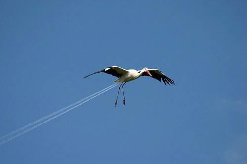 Soaring Jet Bird