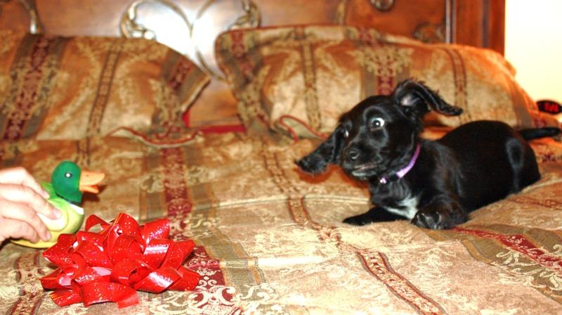 Costa Mesa puppy