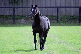 Sunday Silence - Triple Crown 1989