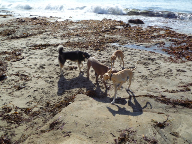 Best Dog Friendly Beaches Santa Cruz