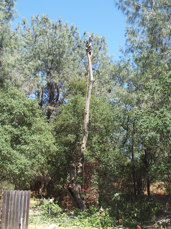 Kent Arborist Tree Removal Amp Stump Grinding Granite Bay