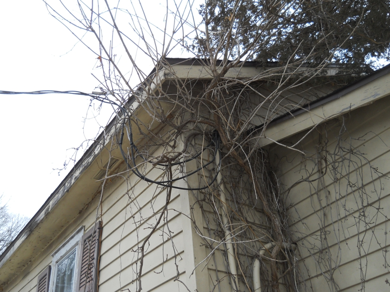 Electrical wires overgrown on Minnesota home