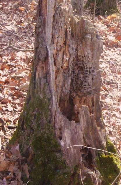 Old Tree Stump HomeRome 410-530-2400