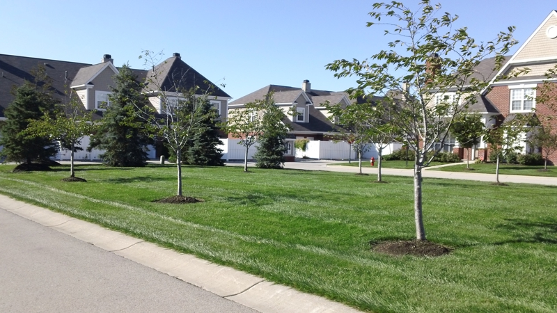 Centennial Townhomes Westfield Indiana