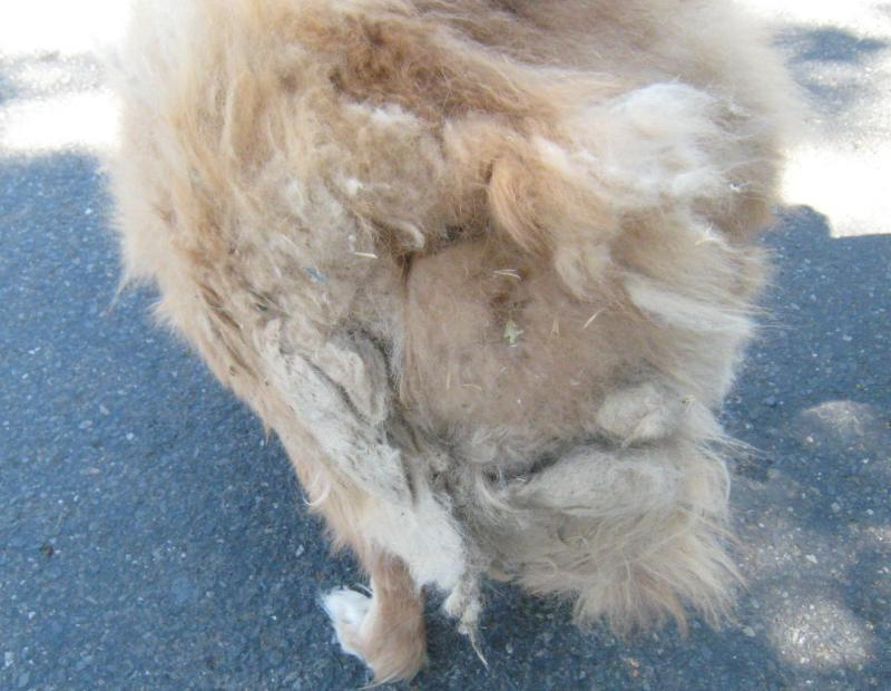 The Matted Hair On His Derriere! - Lisa Wetzel RE/MAX Realty Affiliates
