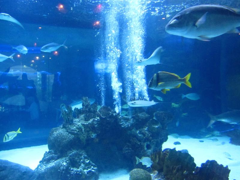 The Downtown Houston Aquarium Dinner And Entertainment