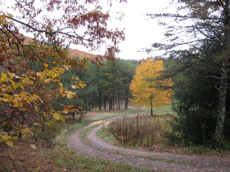 Acreage For Sale In Highland County Viginia