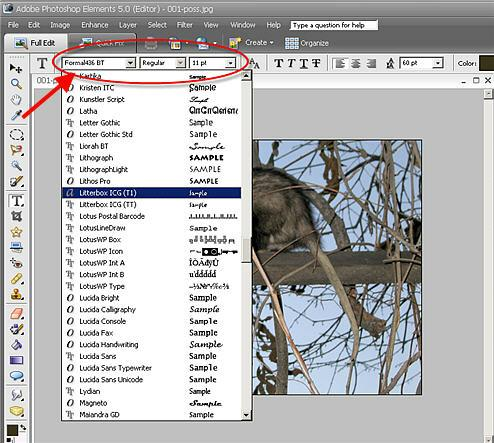how to add text in photoshop elements