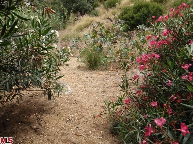 Vacant Land in Hollywood Hills, Endre Barath,Jr