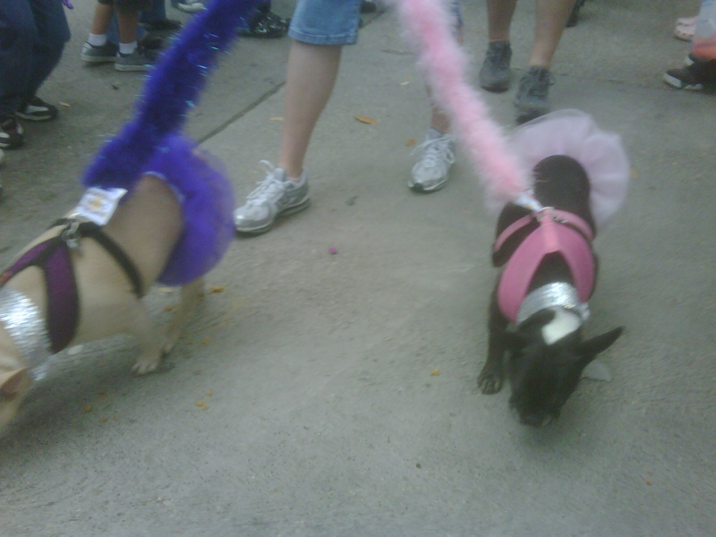 Baton Rouge Louisiana Mardi Gras Parade Mystic Krewe of Mutts