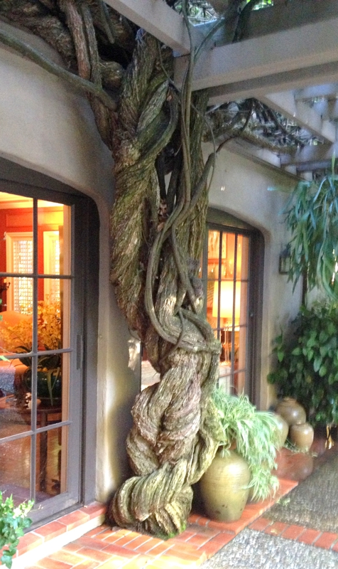 Can Tree Roots Damage A Silicon Valley Home S Foundation