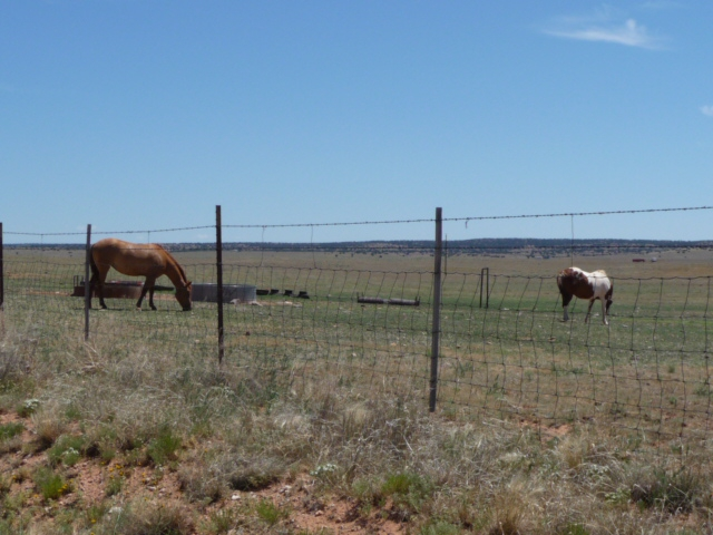 horses on the NM ranch