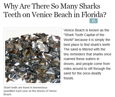 venus beach florida map with Kindergarten In Venice Florida Home Of Ringling Brothers Circus And The Shark Tooth Capital Of The World on Siesta Key Condos likewise Index further 37847903 in addition Seashell Identify Guide To Southwest Florida Shells besides Photo Gallery.