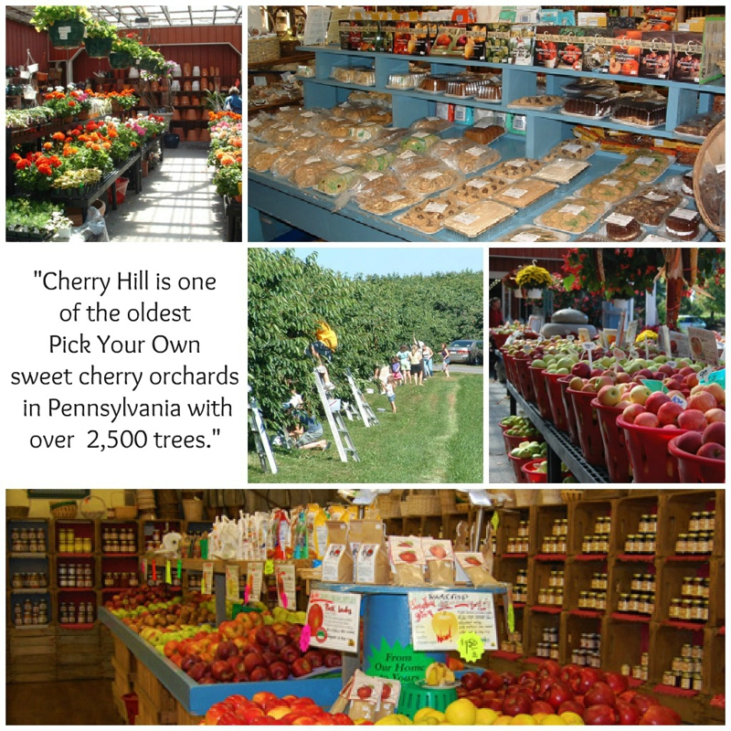 Cherry Hill Orchards Outlet