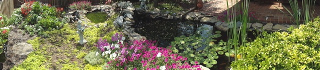 Beautiful flowers adorn the Koi Pond