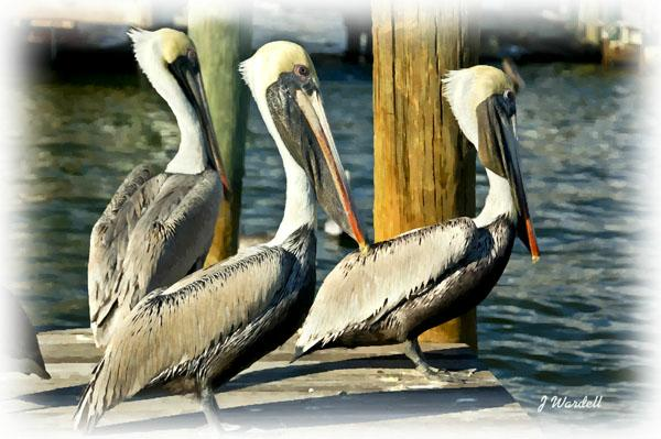 Birdwatching in Naples Florida Pelican Bay