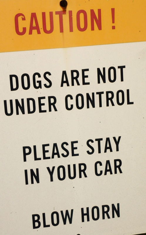 Dog Security sign