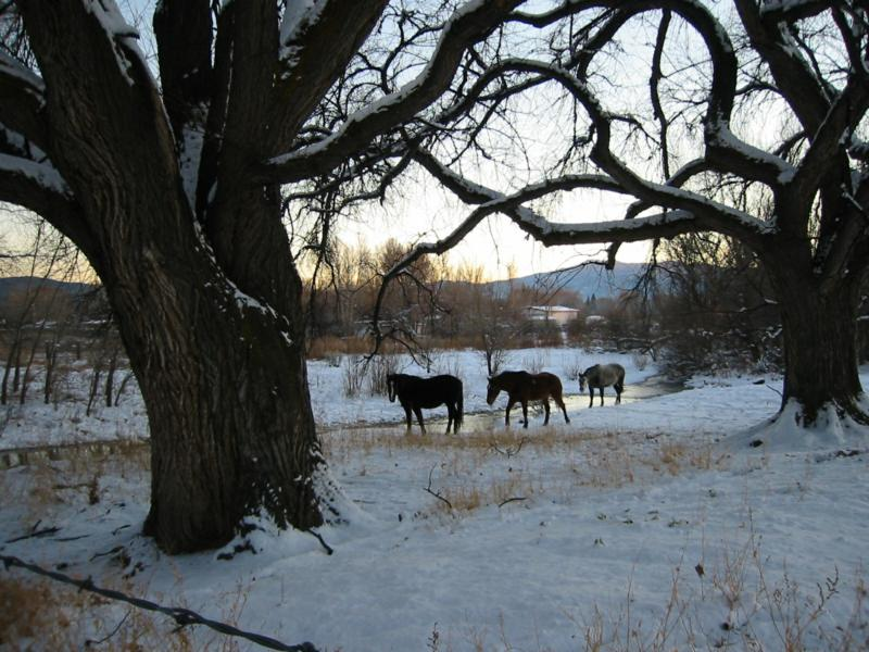 Taos Pueblo Ponies Next Door