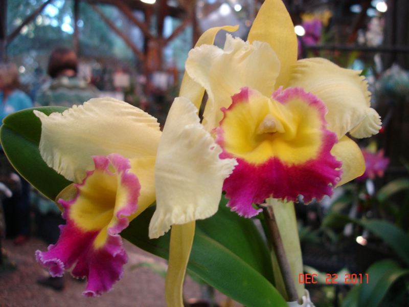 Orchids From Marie Selby Botanical Gardens In Sarasota Fl