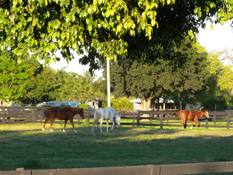 Wellington horse farms and barns