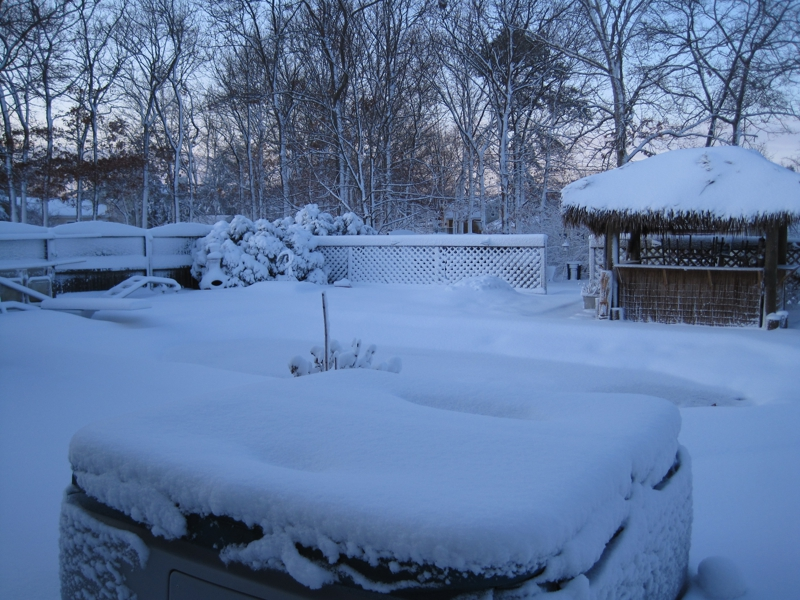 Backyard Winter