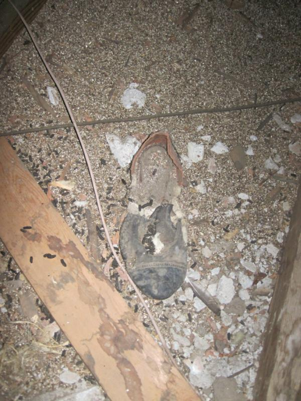 Old shoe - Chelan Home Inspections