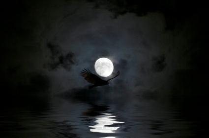 Picture of night hawk flying with moon in background