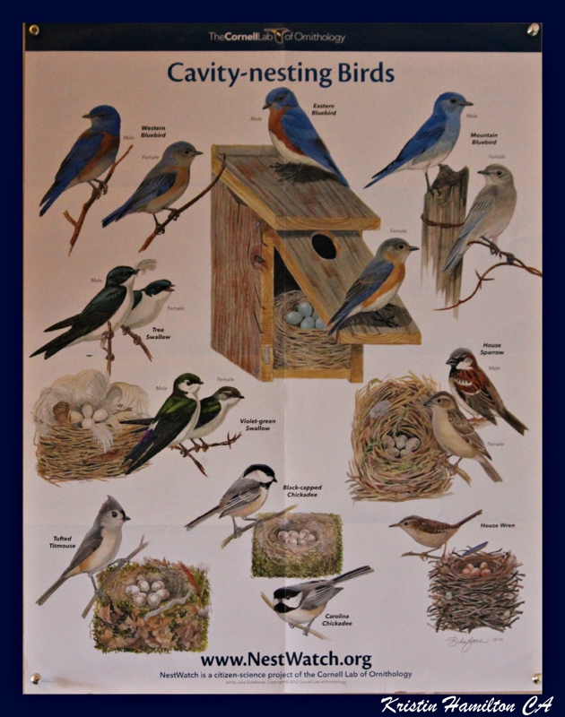 Have you visited Cornell Ornithology Site...a Great Bird Site