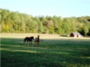 Horse Ranch For Sale In Alabama