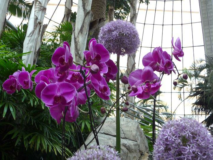 Orchids HomeRome Realty