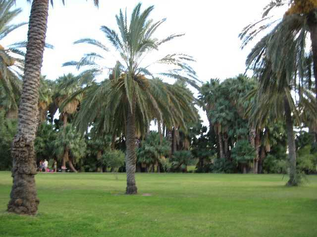 Palm trees and picnic areas at Agua Caliente Park
