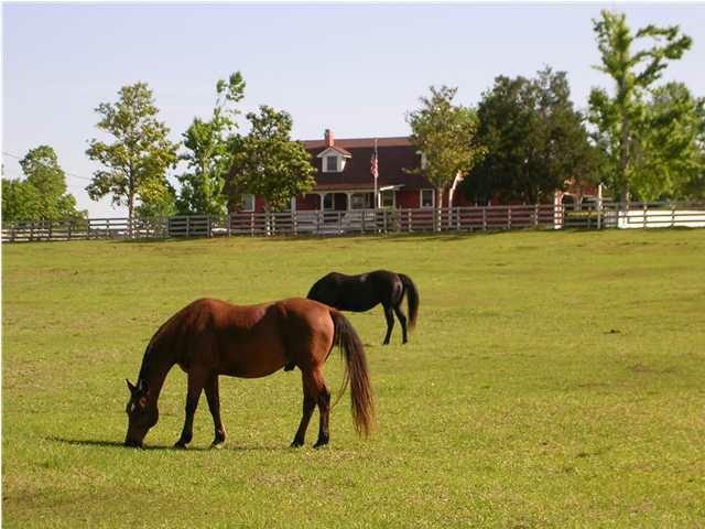 Horse property Paradise Valley