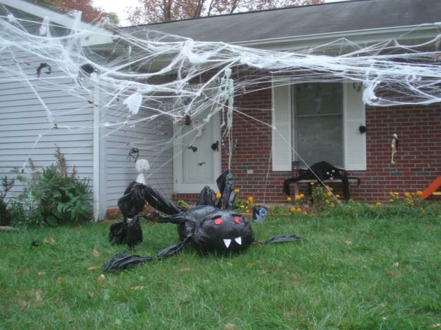 Spiders in Kentucky Home Inspectors yard