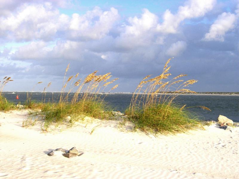 sea oats at ponce inlet jetty