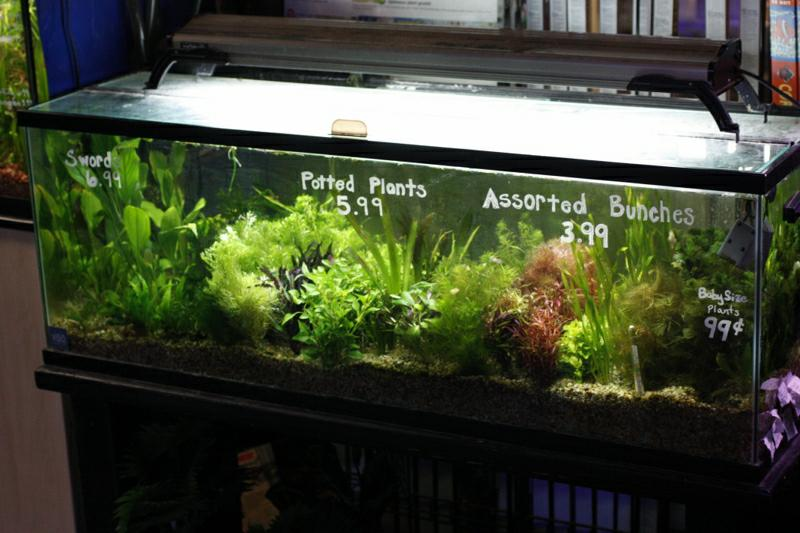 ... Mission Valley Realtor: Need an aquarium? Head to Fountains Aquarium