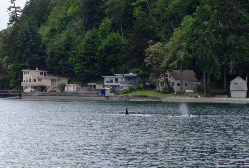 Hood canal waterfront cottage for sale charm charm for Hood canal cabin for sale
