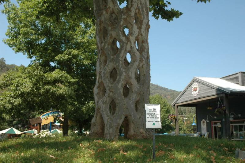 Gilroy gardens for Gilroy garden trees