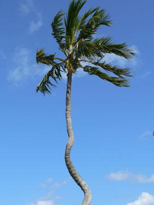 Miami Shores Boardwalk Palm
