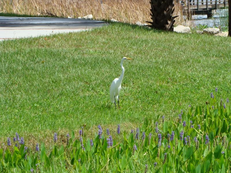 Crane in Jacksonville Florida