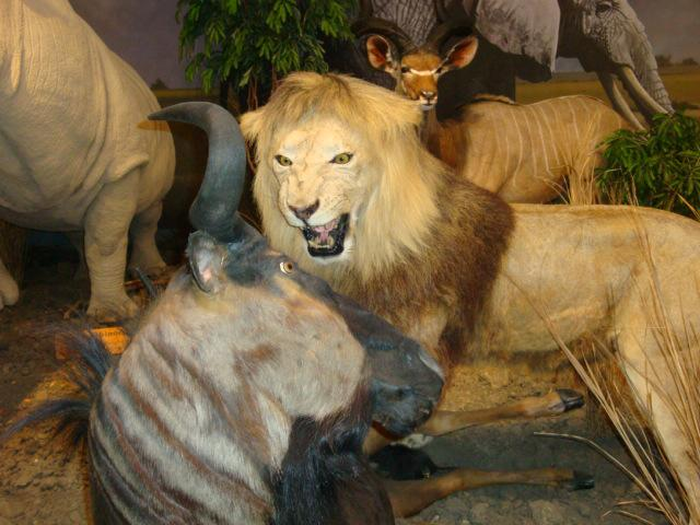 animals on display in Cabelas