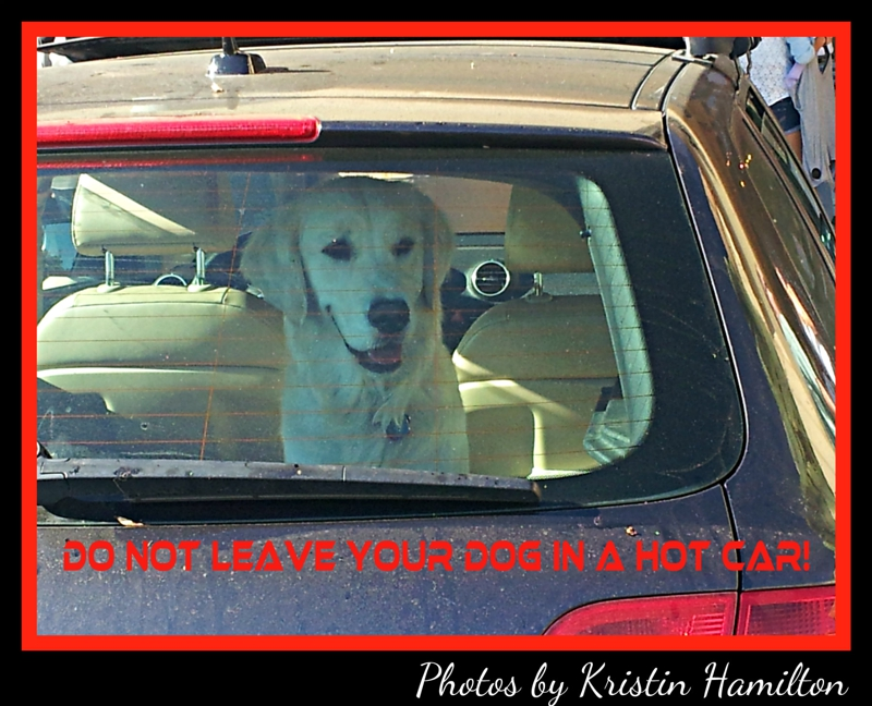 Do not leave your dog in a hot car