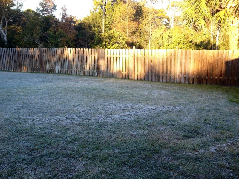 frosty grass in Melbourne, Florida