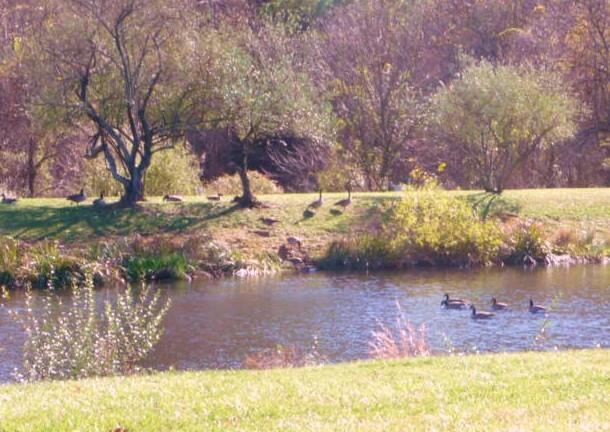 The Risteau Pond HomeRome 410-530-2400