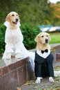 Dogs in formal wear