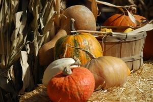 Pumpkins in St. George Utah